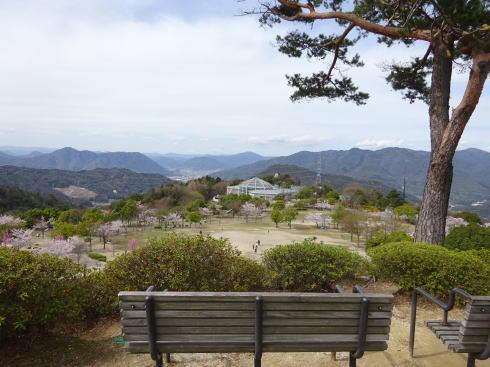 広島市森林公園 園内の様子を一望