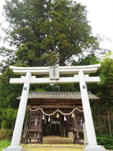蘇羅比古神社 大杉