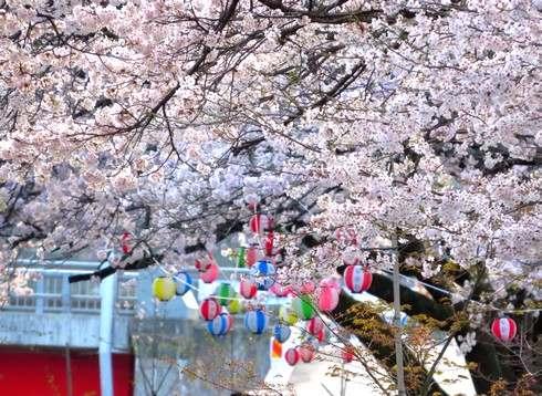 上殿さくら公園、安芸太田町の桜お花見スポット