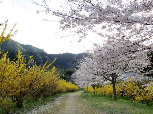 安野花の駅公園 の風景4