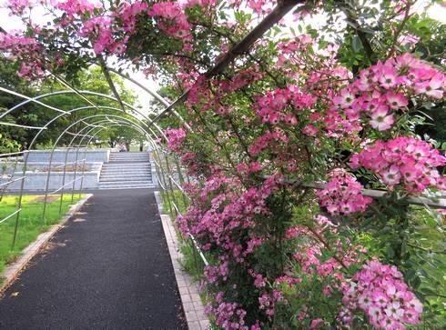 春日池公園には花がいっぱい