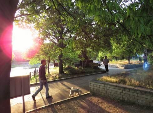 春日池公園のウォーキングコース
