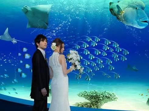 マリホ水族館 結婚式などイベント利用も