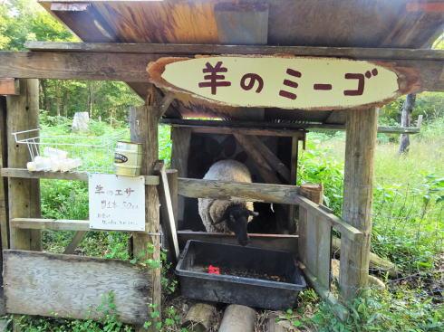 北広島 ファームノラ 羊