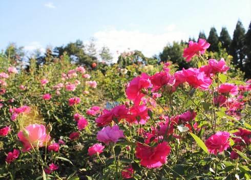 湧永庭園が秋色に染まり始める