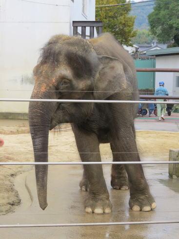 福山市立動物園 ゾウ
