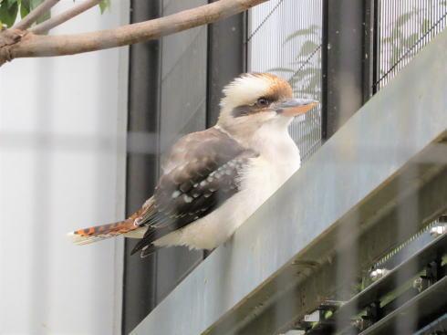 福山市立動物園 動物たち3