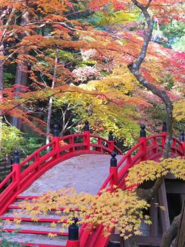 世羅 今高野山 龍華寺の紅葉 画像3