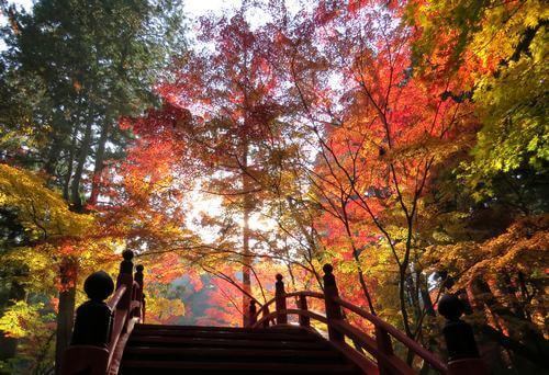 世羅・今高野山の紅葉