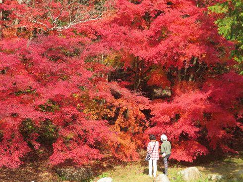 四季の里 もみじ谷園の紅葉にうっとり、広島県府中市で