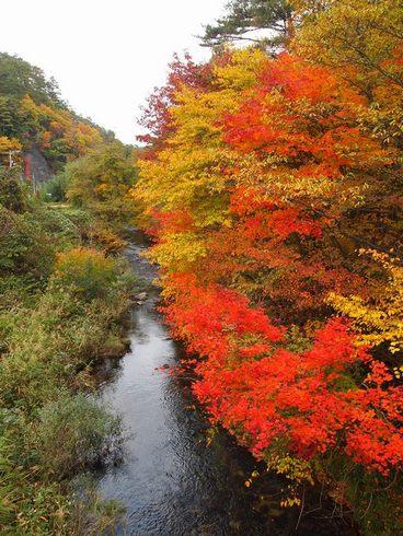広島・魅惑の里の紅葉が見頃に