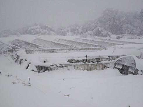 2017年1月15日 広島県庄原市の雪の様子4