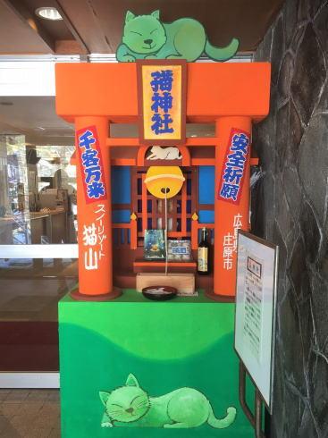 スノーリゾート猫山 猫神社の写真