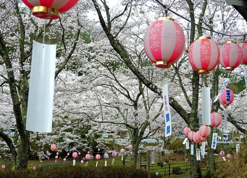 土師ダム 満開の桜に包まれる2