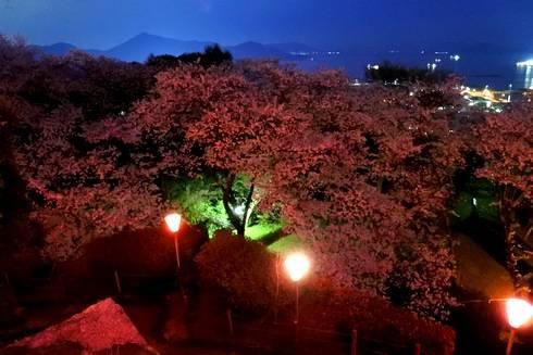 亀居公園の夜桜、山頂からの眺め
