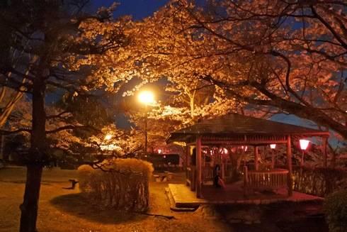 亀居公園の夜桜、ベンチのある広場も