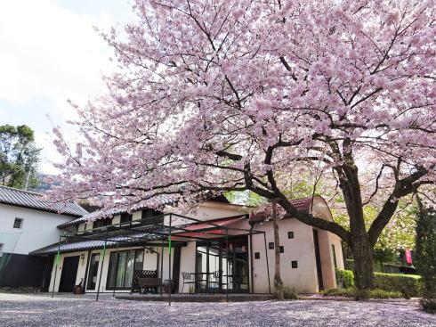 広島市安佐北区 白木 サコダノサクラ 桜と外観2