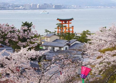 広島 桜 ランキング10位 宮島の桜