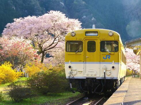 広島 桜 ランキング5位 花の駅公園