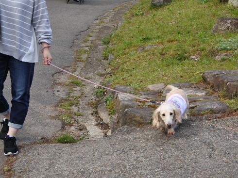 世羅 甲山ふれあいの里 ペットも同伴可能