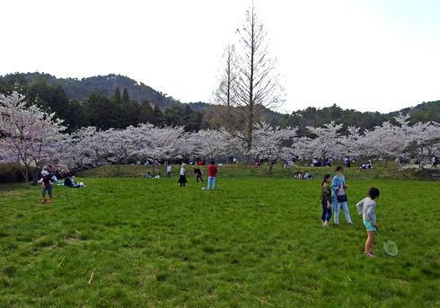 世羅 甲山ふれあいの里 お花見ができる広場も