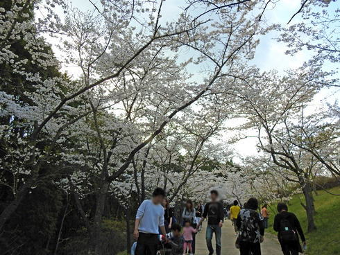 世羅 甲山ふれあいの里 ソメイヨシノの桜もある