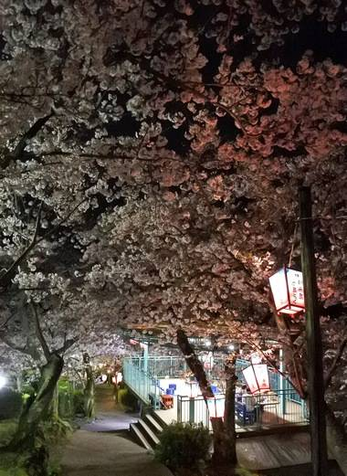 正福寺山公園の展望台