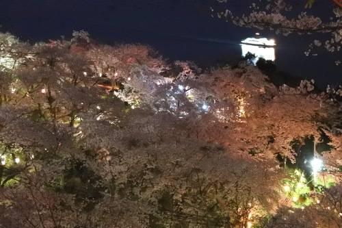 正福寺山公園の夜桜が美しい、ボンボリの明かり優しく