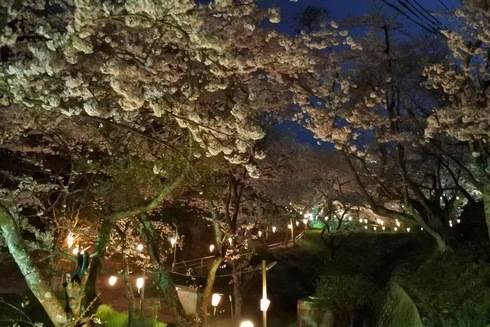 正福寺山公園、桜の道2