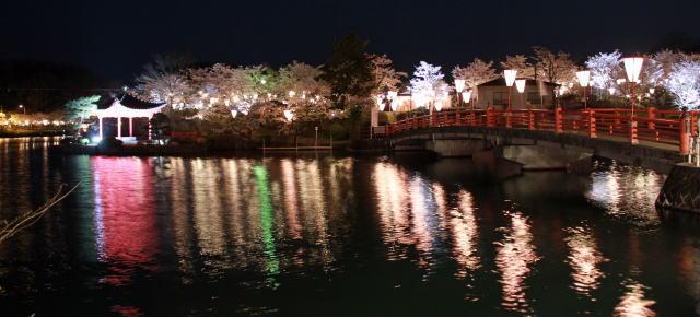 上野公園(庄原)夜桜ライトアップ 画像2