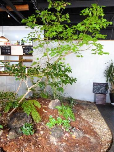 広島可部 エルクルーカフェ 店内の中庭