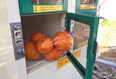 みかんの自動販売機がある風景 広島県・熊野町