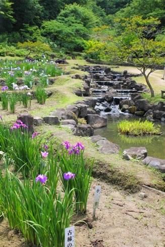上下あやめまつり、矢野温泉公園 式の里で