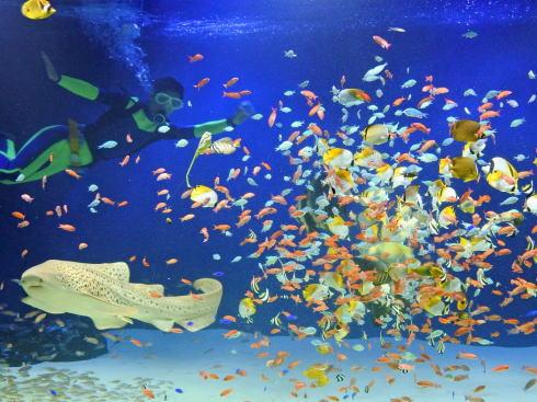 マリホ水族館、広島・マリーナホップにオープン!お得な年間パスも