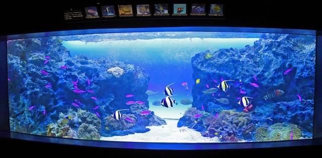 マリホ水族館 海の向こうのエントランスゾーン