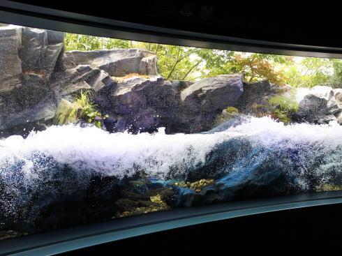 マリホ水族館 渓流