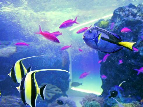 マリホ水族館 海の向こうのエントランスゾーン2