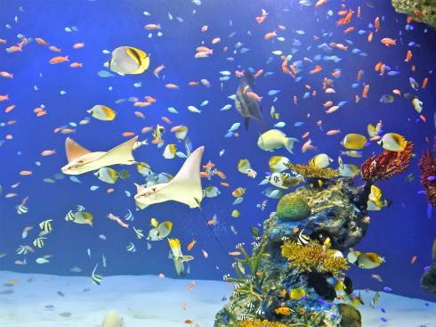 マリホ水族館 ラグーン水槽3