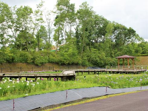 広島県立みよし公園 菖蒲園の風景3