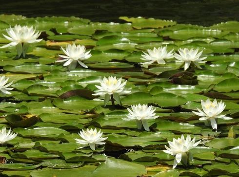 三景園で花まつり2