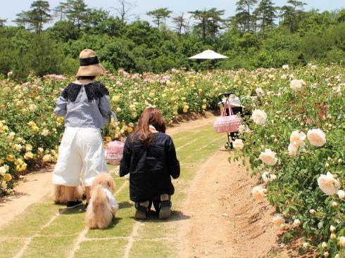 世羅高原 花の森、バラ園はペットも入園可能