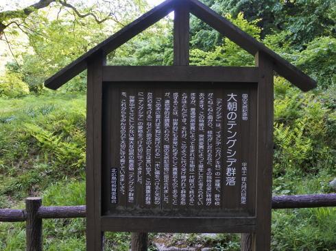 北広島町 テングシデの写真4