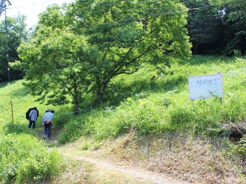 神石高原 山ゆりの里 画像5