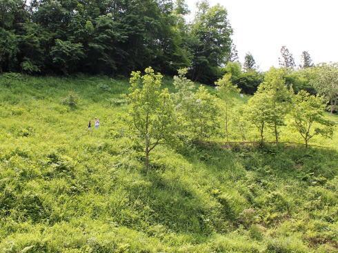 神石高原 山ゆりの里 画像6