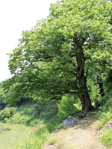 神石高原 山ゆりの里 画像16