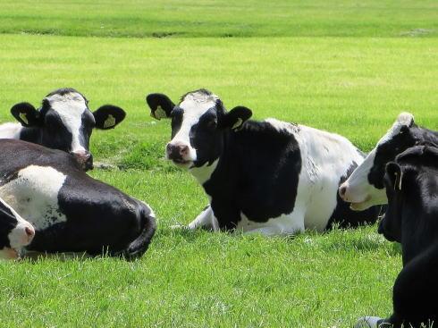 おいしい牛乳フェスティバル、砂谷牛乳の牧場体験イベント