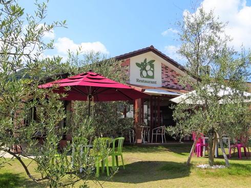 江田島オリーブファクトリー、緑の木と海に囲まれたレストラン
