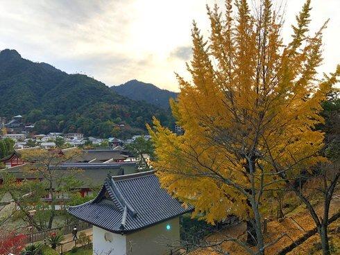 宮島・紅葉を見下ろす