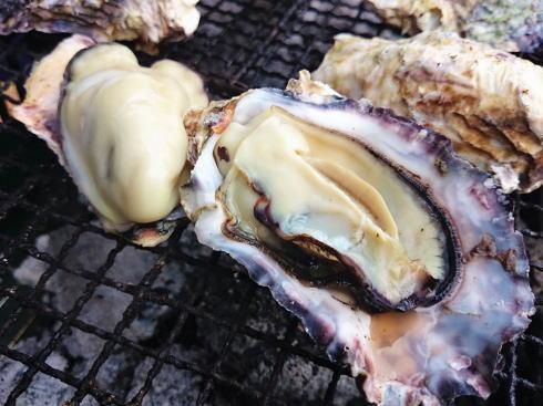 広島市水産まつりinマリーナホップ、黒鯛・カキ・穴子の実演販売も