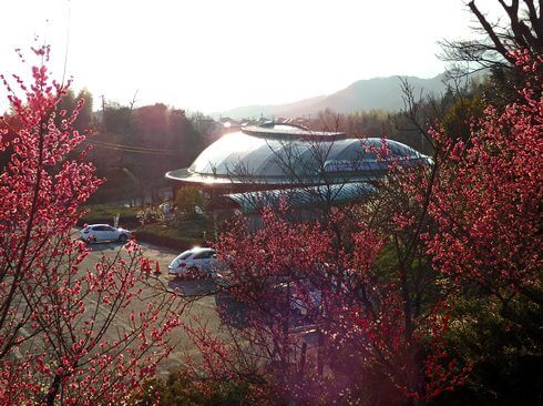 広島県 梅が咲くスポット、ちゅーピーパーク